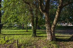 Деревья берега реки Стоковое Изображение