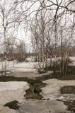Деревья березы без листьев в предыдущей весне марш Стоковое Изображение