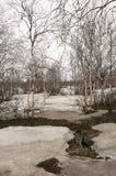 Деревья березы без листьев в предыдущей весне марш Стоковые Фотографии RF