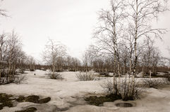 Деревья березы без листьев в предыдущей весне марш Стоковая Фотография RF