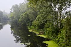 Деревья березы вдоль реки Туманная ненастная погода Стоковое Фото