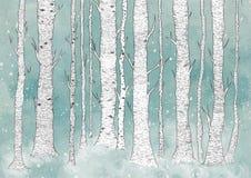 Деревья березы Стоковые Изображения RF