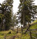 Деревья вдоль линии загородки с горной цепью Стоковые Изображения
