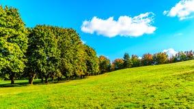 Деревья вдоль майны страны под голубым небом Стоковая Фотография