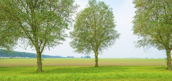 Деревья вдоль поля в сельской местности Стоковое фото RF