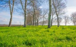 Деревья вдоль поля в солнечном свете Стоковая Фотография RF
