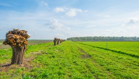 Деревья вдоль поля в солнечном свете Стоковое фото RF