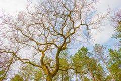 Деревья вдоль поля в солнечном свете Стоковое Изображение
