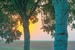 Деревья вдоль поля на восходе солнца в лете Стоковые Фото