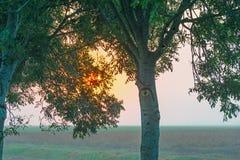 Деревья вдоль поля на восходе солнца в лете Стоковые Изображения RF