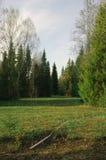 Деревья вегетации леса промоины поля сезона Стоковое Изображение RF