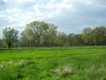 Деревья весной на более низкой зоне Рейна Стоковые Фотографии RF