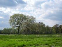 Деревья весной на более низкой зоне Рейна Стоковые Изображения