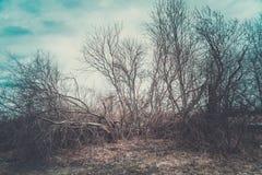 Деревья весной против бурного неба стоковое изображение