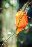 Деревья весны Бостона в задворк Стоковые Фотографии RF