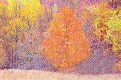 Деревья весны Стоковая Фотография RF