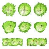 Деревья - взгляд сверху иллюстрация вектора