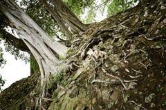 Деревья виска Стоковое фото RF