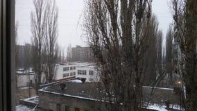 Деревья вне окна стоковые фотографии rf