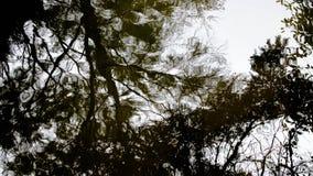 Деревья восхищают их отражение стоковое фото