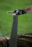 Деревья вырезывания для швырка, вырезывания ручной пилы Стоковые Фотографии RF