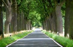 Деревья выровняли проселочную дорогу Стоковые Изображения RF