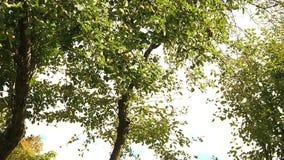 Деревья в ландшафте леса сток-видео