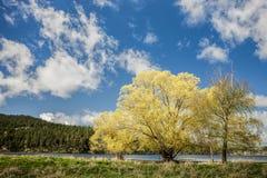 Деревья в ландшафте стоковые фотографии rf