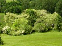 Деревья в весеннем времени Стоковая Фотография RF