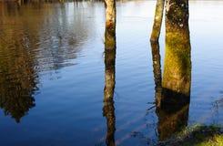 Деревья в воде на времени весны стоковые изображения