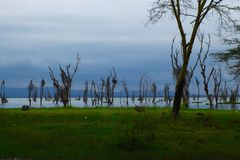 Деревья в воду Стоковое Изображение RF