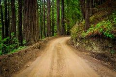 Деревья в лесе, вдоль дороги побережья, в большом Sur Стоковое Фото