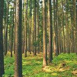 Деревья в лесе леса и естественном фоне для релаксации и воссоздании в природе Весеннее время Стоковые Изображения RF