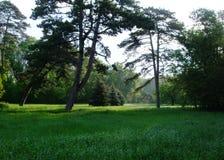 Деревья в лесе и парке стоковые изображения