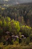 Деревья в лесе Стоковая Фотография
