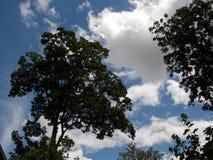 Деревья в лете Стоковые Изображения