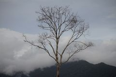 Деревья в задней горе Стоковое Изображение