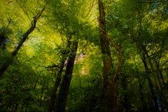 Деревья в зеленом лесе Стоковое Изображение RF