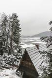 Деревья в зиме Стоковые Изображения RF