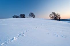 Деревья в зиме Стоковые Изображения