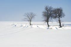 Деревья в зиме Стоковое Фото