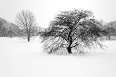 Деревья в зиме 1 Стоковое фото RF