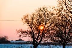 Деревья в зиме стоковые фотографии rf