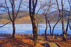 Деревья в зиме стоковая фотография