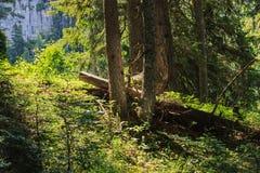 Деревья в красивом вечере освещают в лесе Стоковое Изображение RF