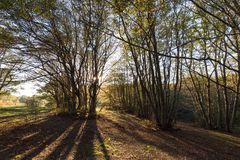 Деревья в лесе Марше Canfaito на заходе солнца при низкое солнце фильтруя сквозные и длинные тени, с теплыми цветами падения и Стоковые Изображения