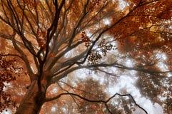 Деревья в лесе с цветами и туманом осени стоковое изображение