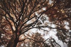 Деревья в лесе с цветами и туманом осени стоковое фото rf