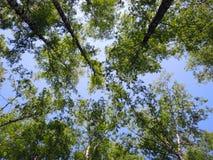Деревья в небе Стоковая Фотография RF