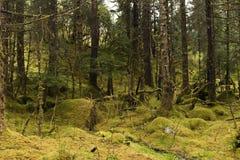 Деревья в дождевом лесе Стоковые Фотографии RF